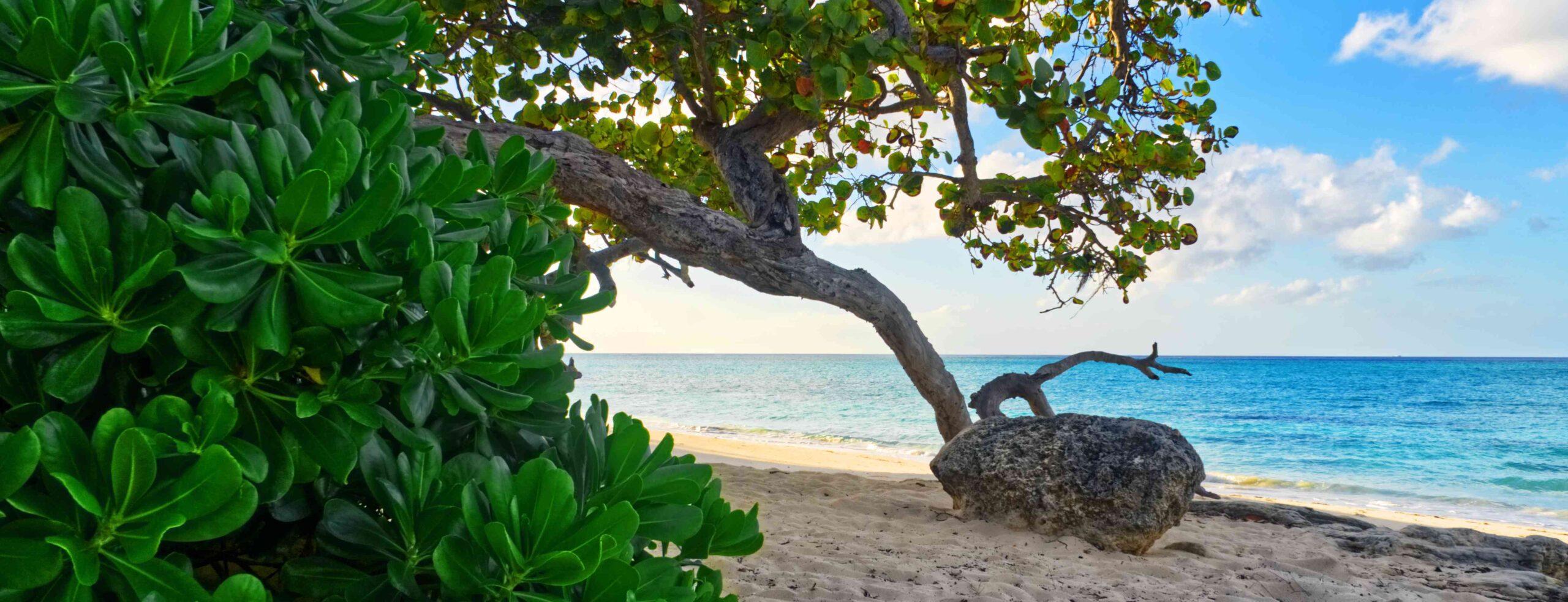 Beach, rock and foliage